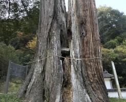 多自枯鴨神社